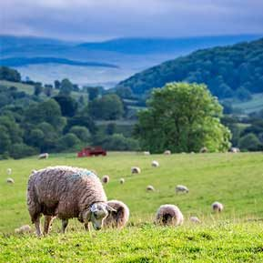 Land for sale in Cumbria