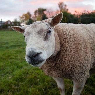 Private Livestock Sales