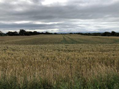 LAND AT BLITTERLEES, SILLOTH, CUMBRIA